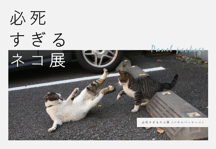 必死すぎるネコ展